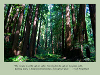 Wallpaper: life quote by Thich Nhat Hanh